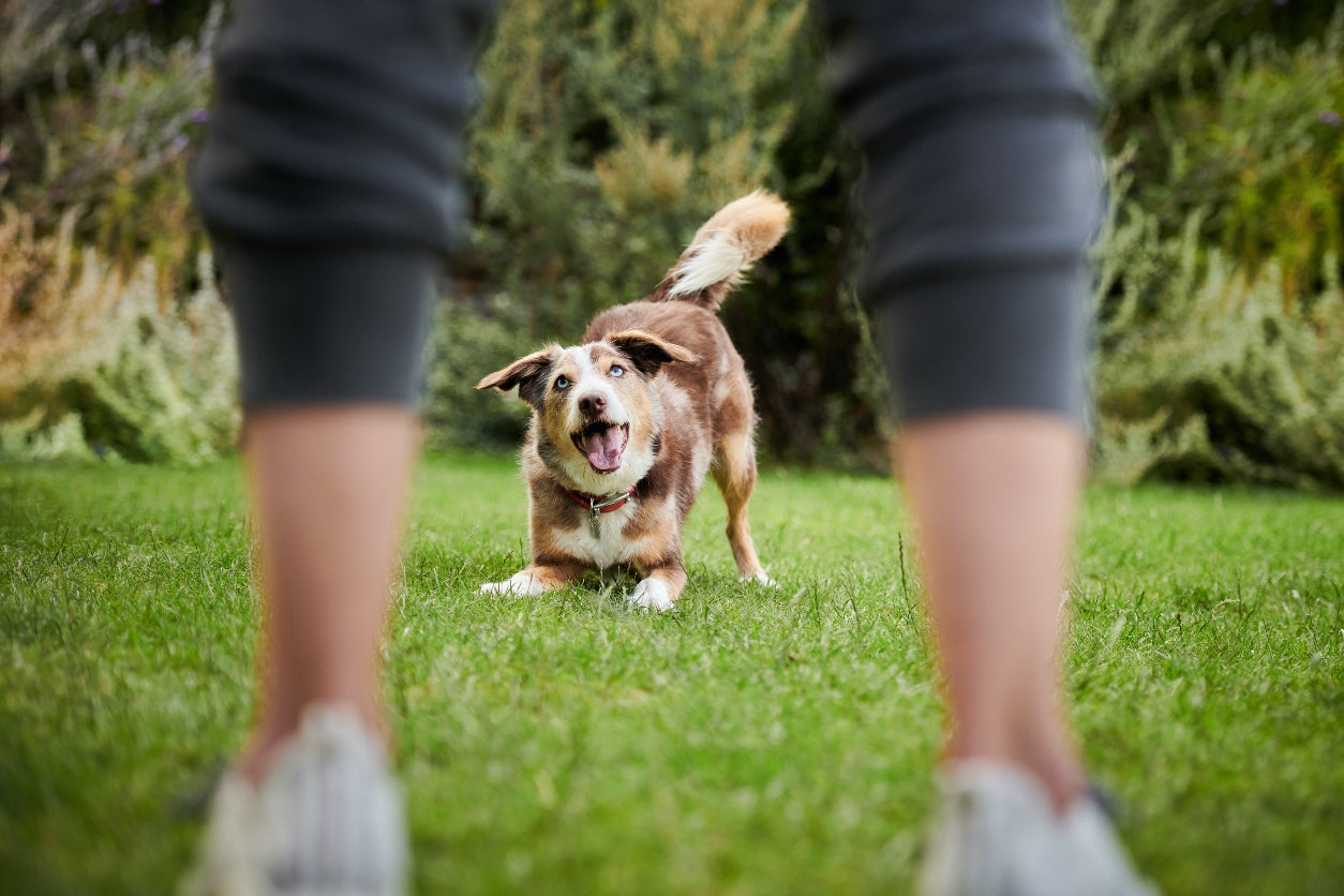 Why Treat Canine Osteoarthritis Pain With Galliprant?
