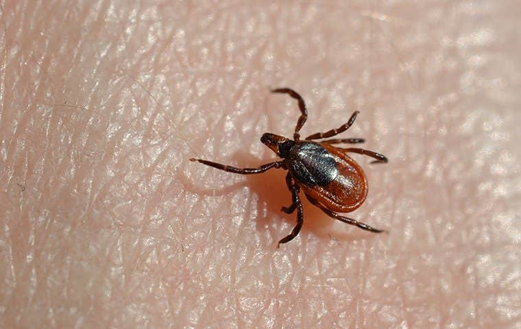 a tick on skin