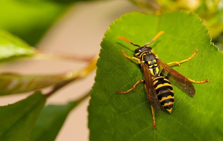 wasp on a leaf