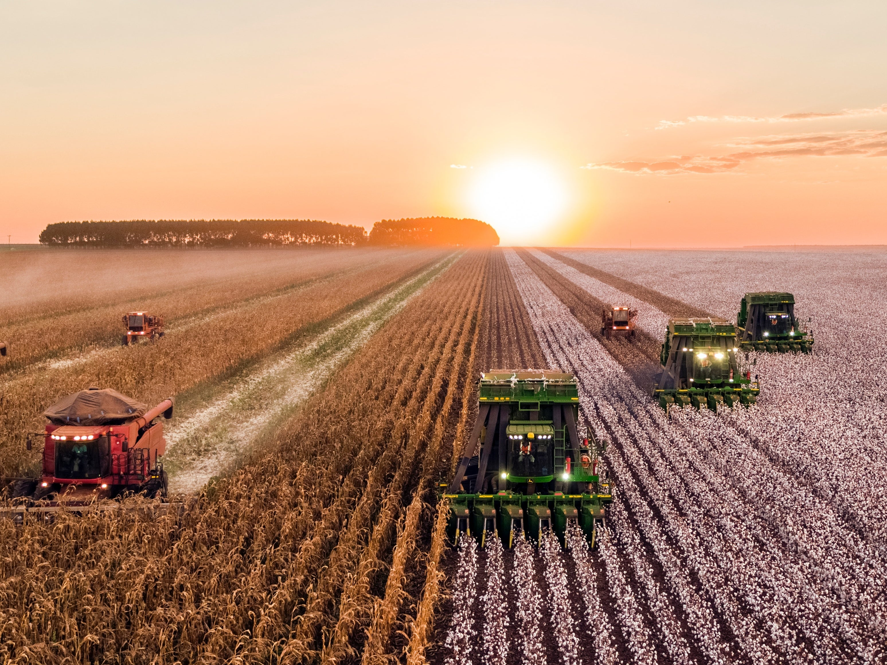 Share farming arrangements: Asset or liability?