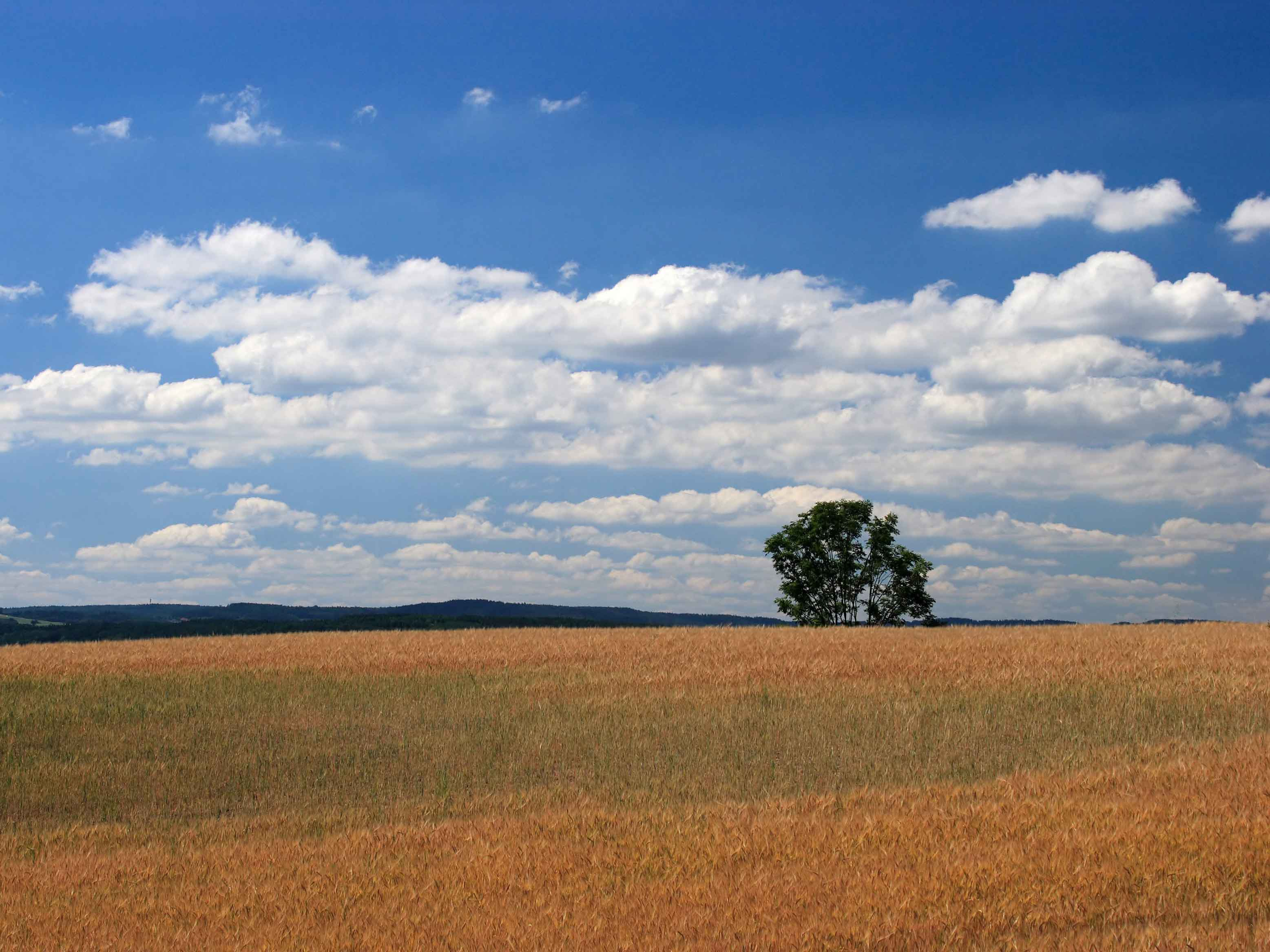 Secure now, pay later: Buying rural land during COVID-19