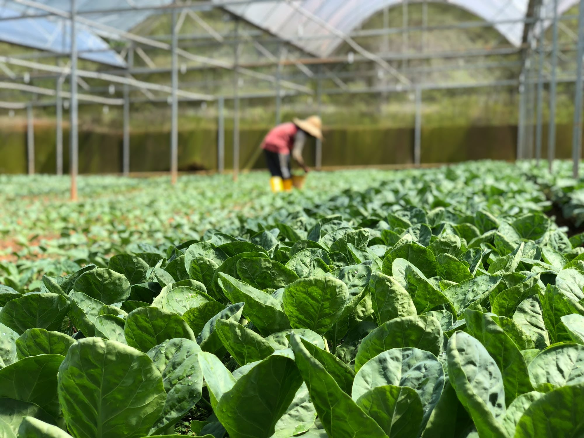 A new path to recruit foreign horticulture workers into Australia