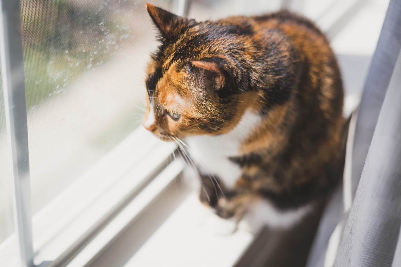 NCAT reinforces its position on pets in strata schemes