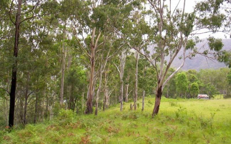 Nymboida River campground