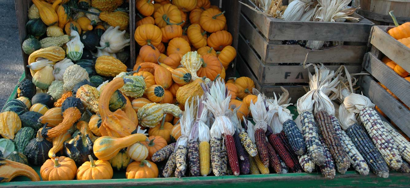 Fall harvest of Indian corn, gourds, and pumpkins