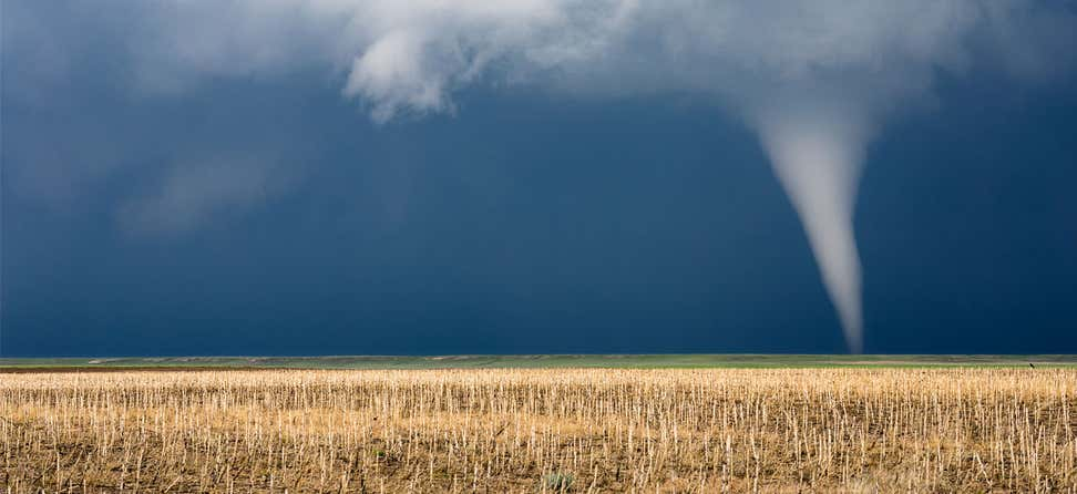 A frightening, long-distance view of a tornado spout in a cornfield.