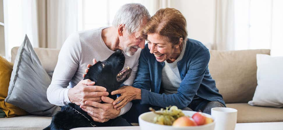 A senior couple is playing with their black lab in their living room.