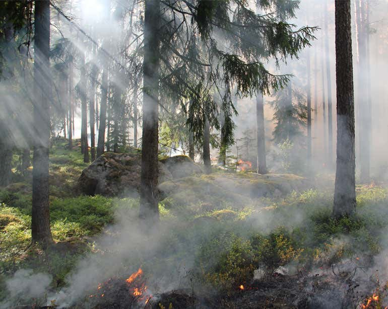 Landscape shot of a forest fire and smoke.