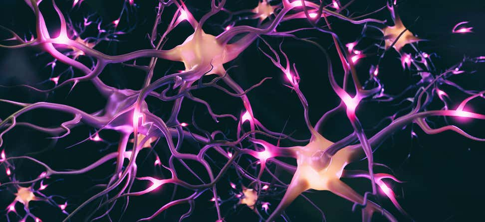 An image of a brain neuron system highlighted, indicating that the neurons are firing.