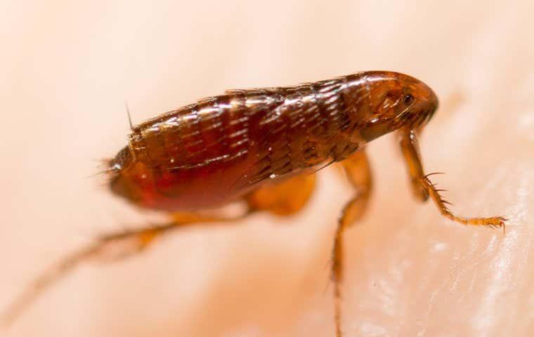 a flea on human in lake worth florida