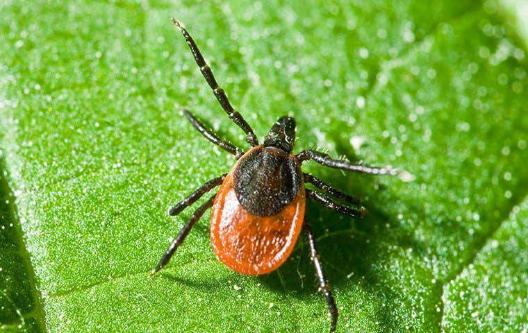 a tick on a leaf in lake worth florida