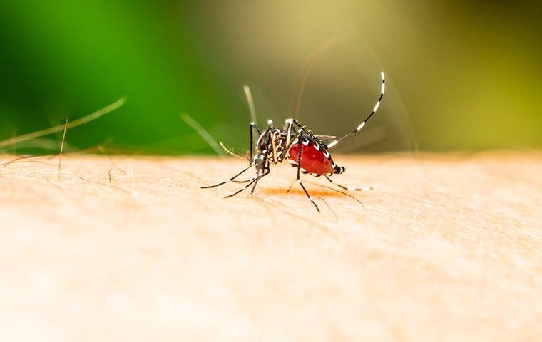 a mosquito biting a persons leg