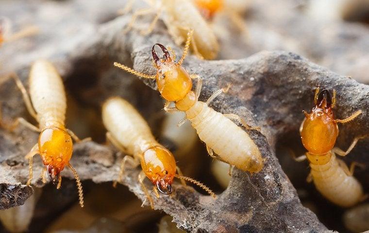 termites on rotten wood