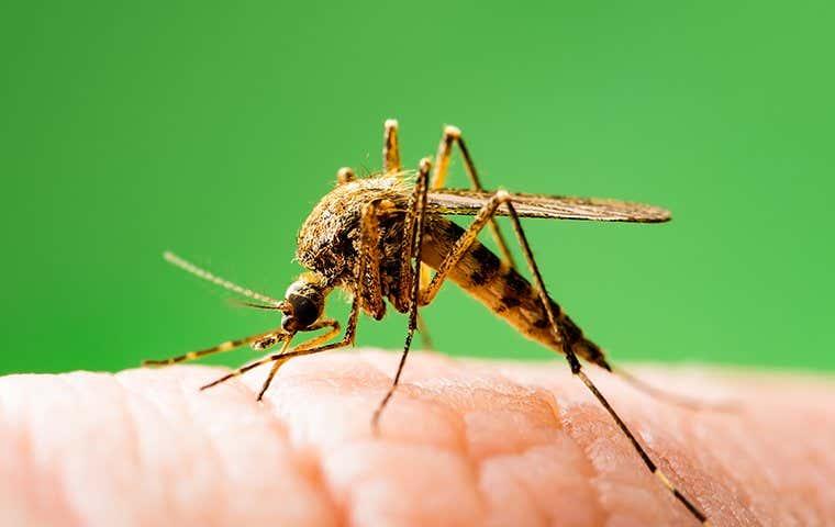 mosquito on skin in lake worth florida