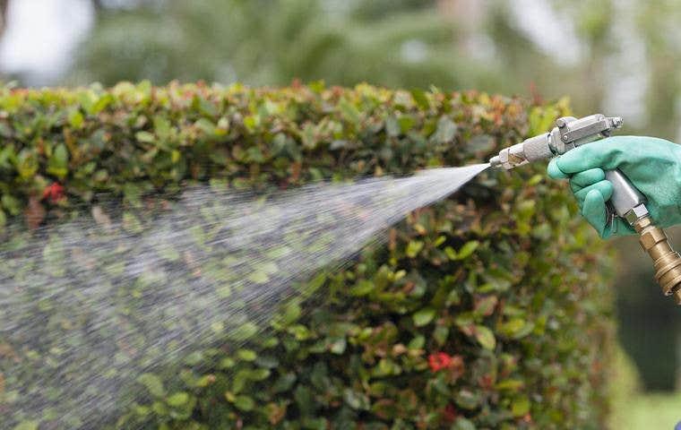 a person spraying a bush in lake worth florida
