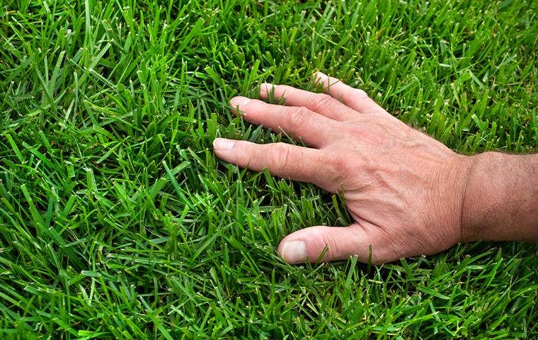 a hand touching grass in lake worth florida