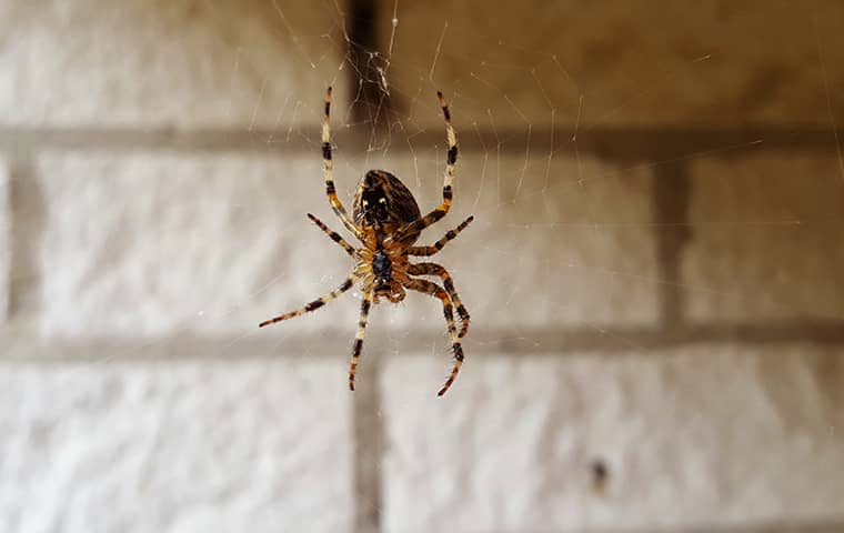 a spider hanging in its web in lake worth florida