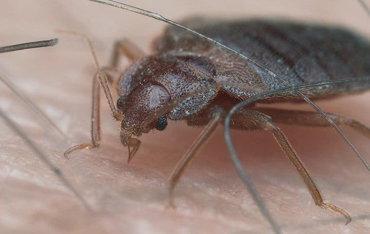 a bed bug biting a person in lake worth