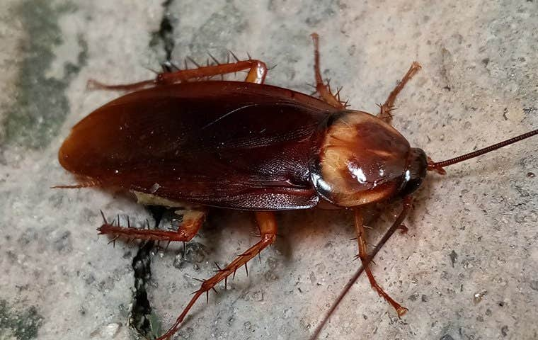 a cockroach on gravel in lake worth florida